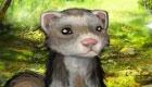 Pet Ferret