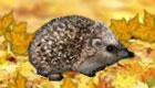Pet Hedgehog Game