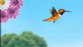 Little Bird Adventure