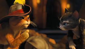 Cats Quest