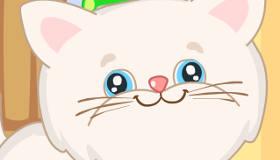 Kitten Daycare