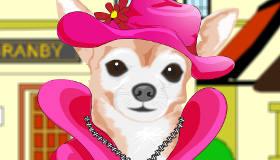 Dress Up A Chihuahua